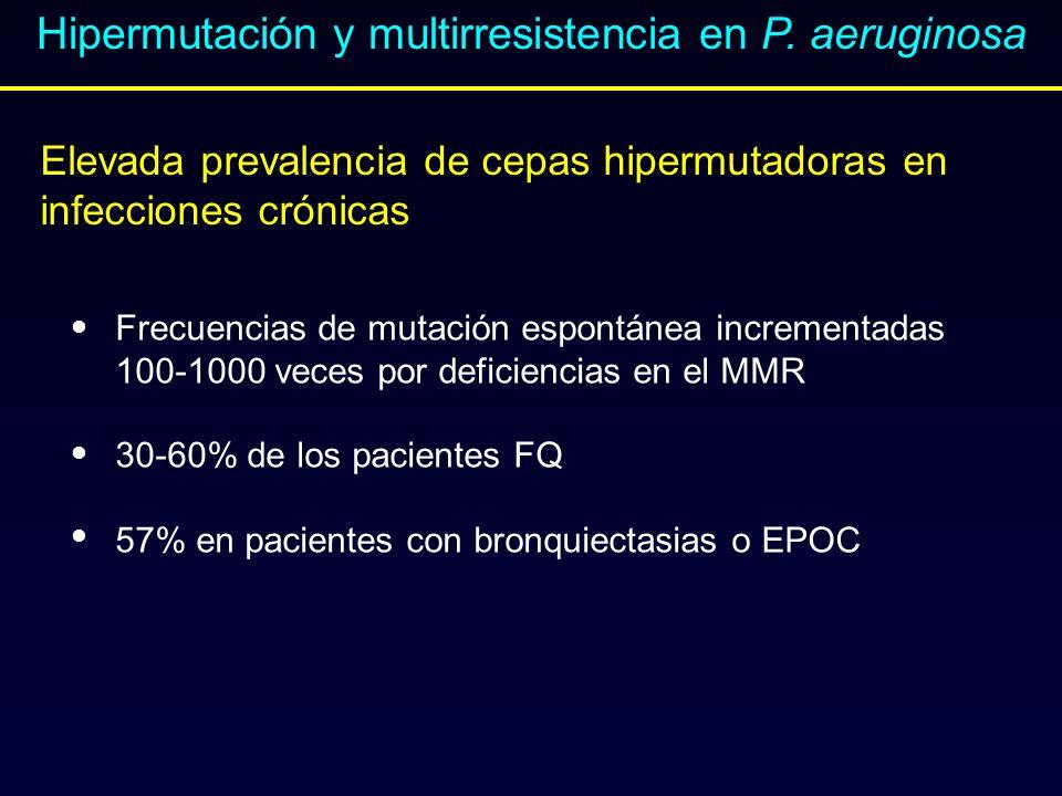 Elevada prevalencia de cepas hipermutadoras en infecciones crónicas Hipermutación y multirresistencia en P. aeruginosa Frecuencias de mutación espontá