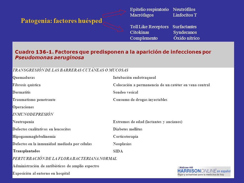 Cuadro 136-1. Factores que predisponen a la aparición de infecciones por Pseudomonas aeruginosa TRANSGRESIÓN DE LAS BARRERAS CUTÁNEAS O MUCOSAS Quemad