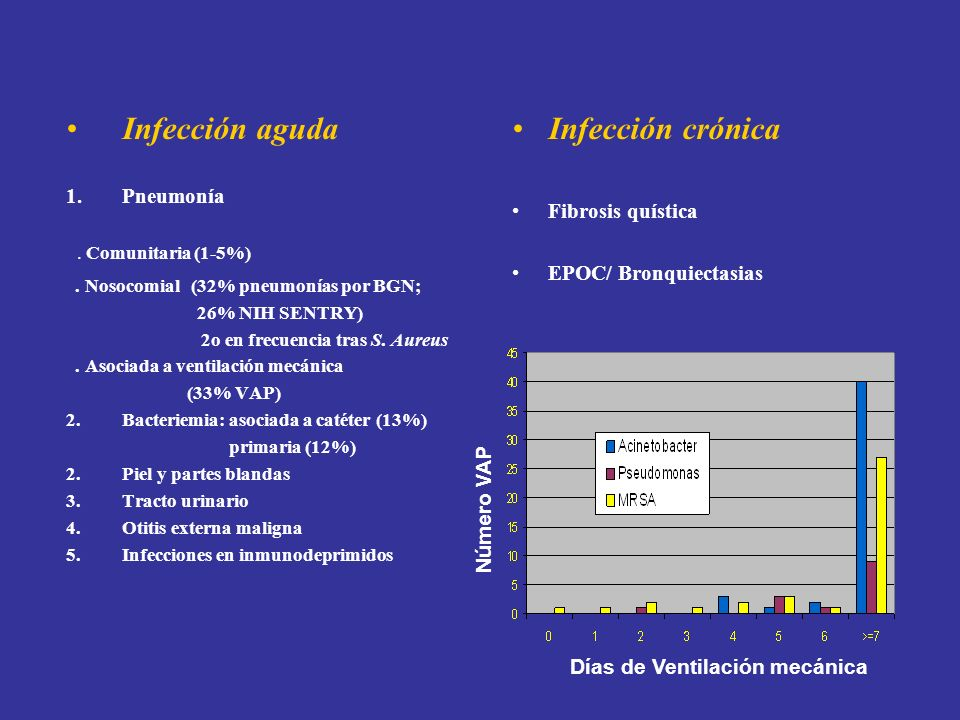 Infección aguda 1.Pneumonía. Comunitaria (1-5%). Nosocomial (32% pneumonías por BGN; 26% NIH SENTRY) 2o en frecuencia tras S. Aureus. Asociada a venti