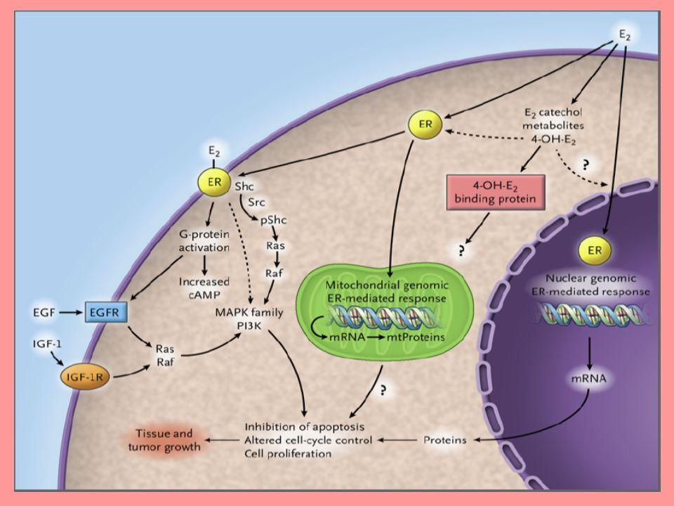 Ensayo Mam-1 GOCSI: Resultados Hazard ratio Antraciclina vs no antraciclina Hazard ratio Quimioterapia + tratamiento hormonal vs quimioterapia sola Recidiva0,860,71 (p = 0,42)(p = 0,04) Supervivencia0,790,86 (p = 0,31)(p = 0,52) Mediana de seguimiento de 5 años Estos datos respaldan el uso de un tratamiento hormonal secuencial después de la quimioterapia adyuvante para pacientes premenopáusicas con cáncer de mama temprano Bianco AR, et al.