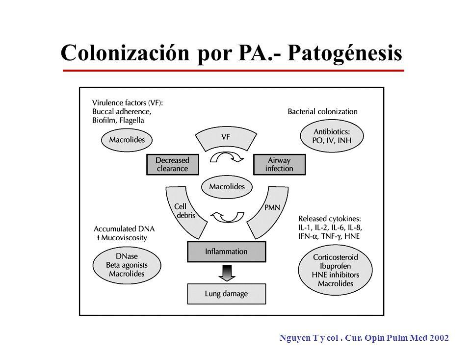 Colonización por PA.- Patogénesis Nguyen T y col. Cur. Opin Pulm Med 2002