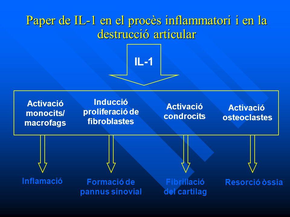 Activació monocits/ macrofags Activació condrocits Inducció proliferació de fibroblastes Activació osteoclastes Inflamació Formació de pannus sinovial Fibrillació del cartilag Resorció òssia IL-1 Paper de IL-1 en el procès inflammatori i en la destrucció articular