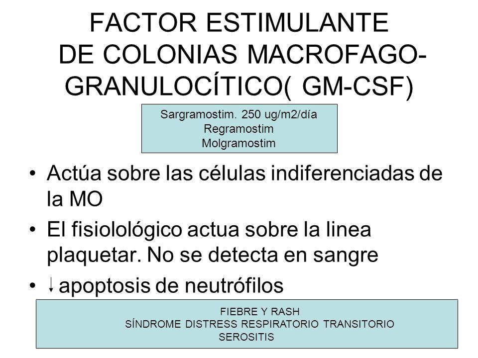 FACTOR ESTIMULANTE DE COLONIAS MACROFAGO- GRANULOCÍTICO( GM-CSF) Actúa sobre las células indiferenciadas de la MO El fisiolológico actua sobre la line