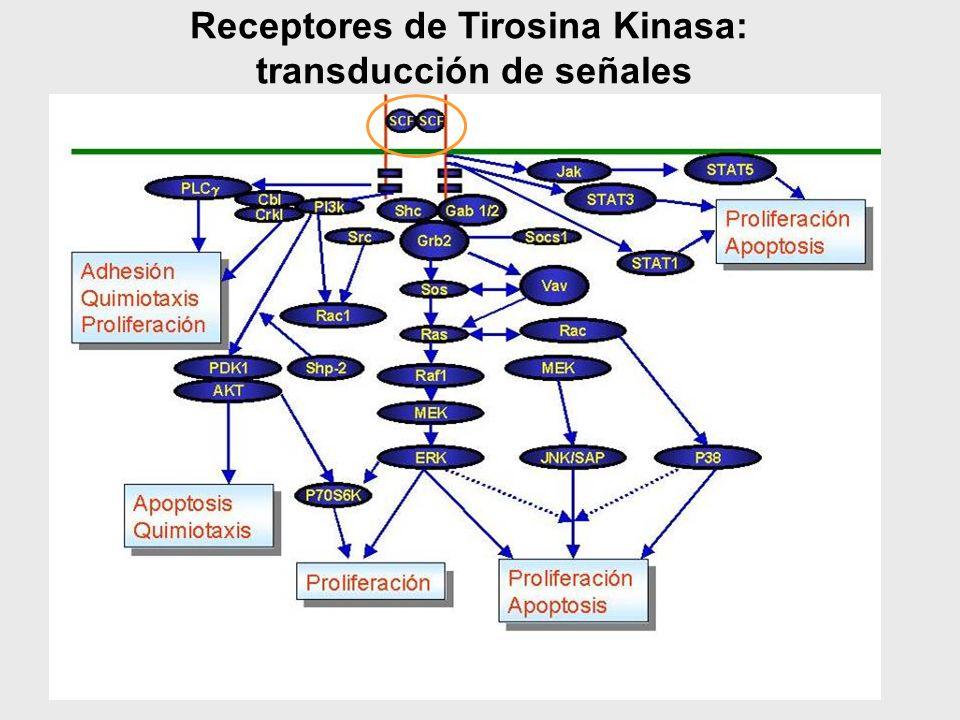 Receptores de Tirosina Kinasa: transducción de señales