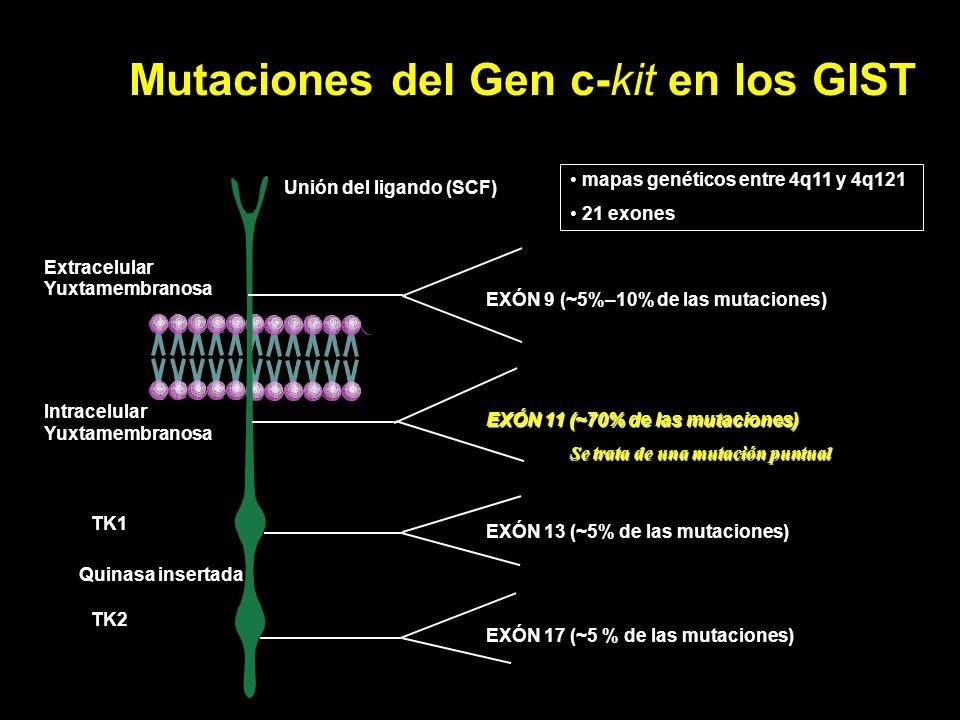 Mutaciones del Gen c-kit en los GIST TK1 TK2 Extracelular Yuxtamembranosa Intracelular Yuxtamembranosa EXÓN 9 (~5%–10% de las mutaciones) EXÓN 11 (~70