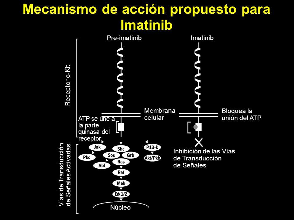 Mecanismo de acción propuesto para Imatinib Núcleo Vías de Transducción de Señales Activadas Receptor c-Kit Pre-imatinibImatinib Bloquea la unión del