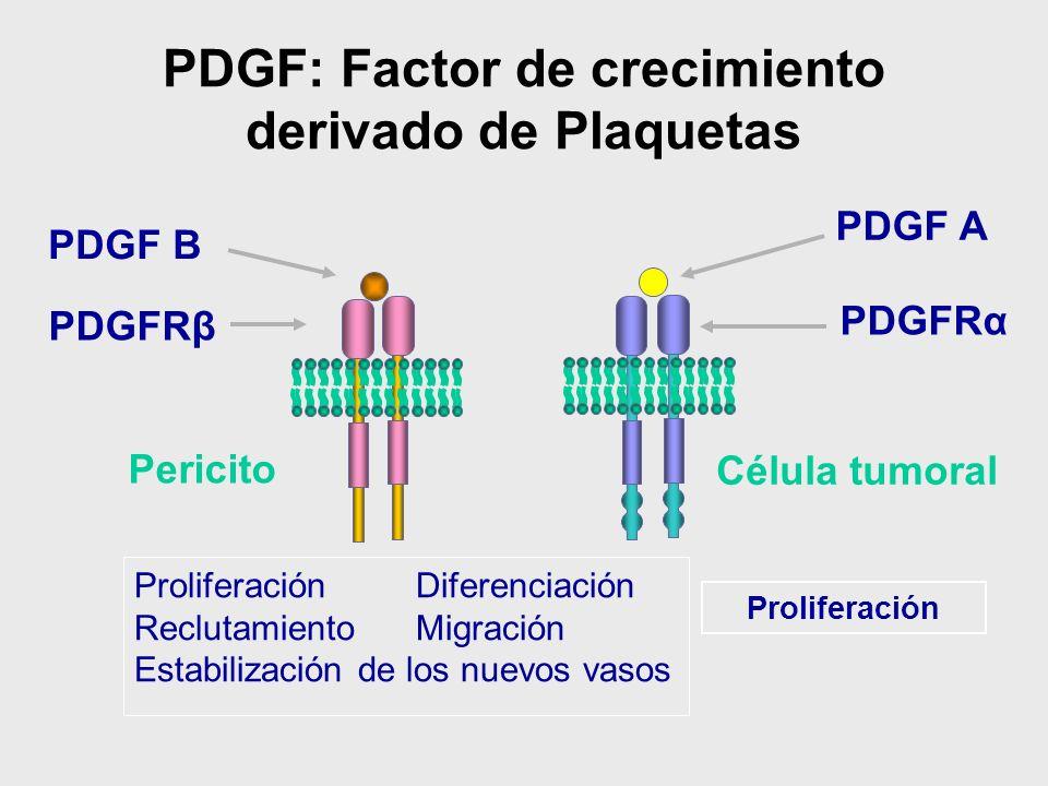PDGF: Factor de crecimiento derivado de Plaquetas Proliferación Diferenciación Reclutamiento Migración Estabilización de los nuevos vasos Célula tumor