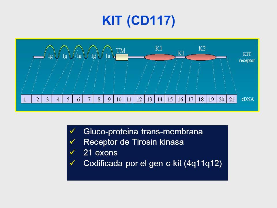Expresión de KIT Embriogenesis –Expresión precoz en células germinales, hematopoyeticas, y melanocitos Adulto –Progenitores Hematopoyeticos –Mastocitos –Células Intersticiales de Cajal