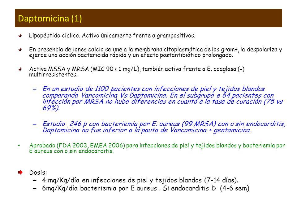 Daptomicina (1) Lipopéptido cíclico. Activo únicamente frente a grampositivos. En presencia de iones calcio se une a la membrana citoplasmática de los