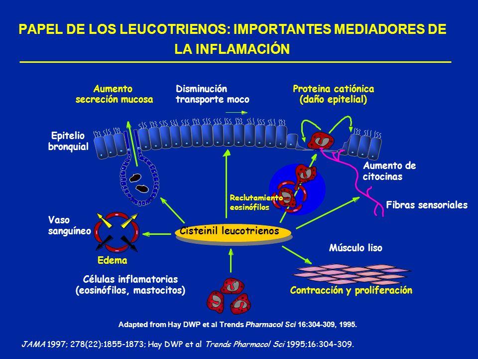 PAPEL DE LOS LEUCOTRIENOS: IMPORTANTES MEDIADORES DE LA INFLAMACIÓN Adapted from Hay DWP et al Trends Pharmacol Sci 16:304-309, 1995. JAMA 1997; 278(2