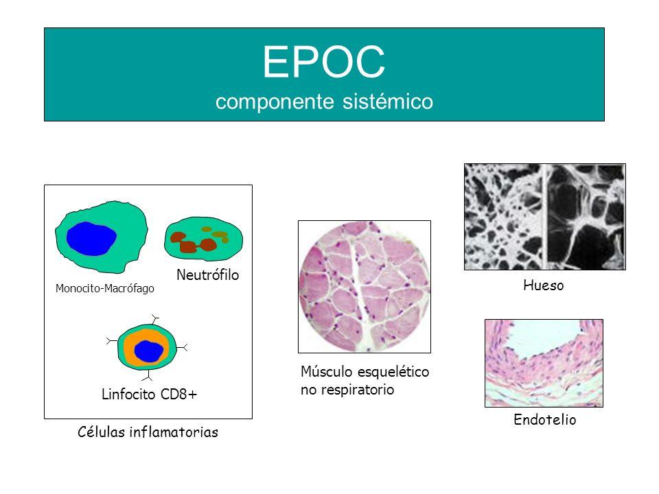 EPOC componente sistémico Monocito-Macrófago Neutrófilo Linfocito CD8+ Músculo esquelético no respiratorio Endotelio Hueso Células inflamatorias