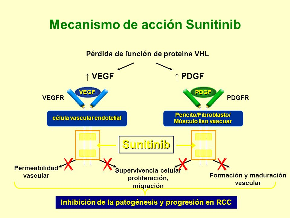 Mecanismo de acción Sunitinib Inhibición de la patogénesis y progresión en RCC VEGF PDGF Permeabilidad vascular Supervivencia celular proliferación, m
