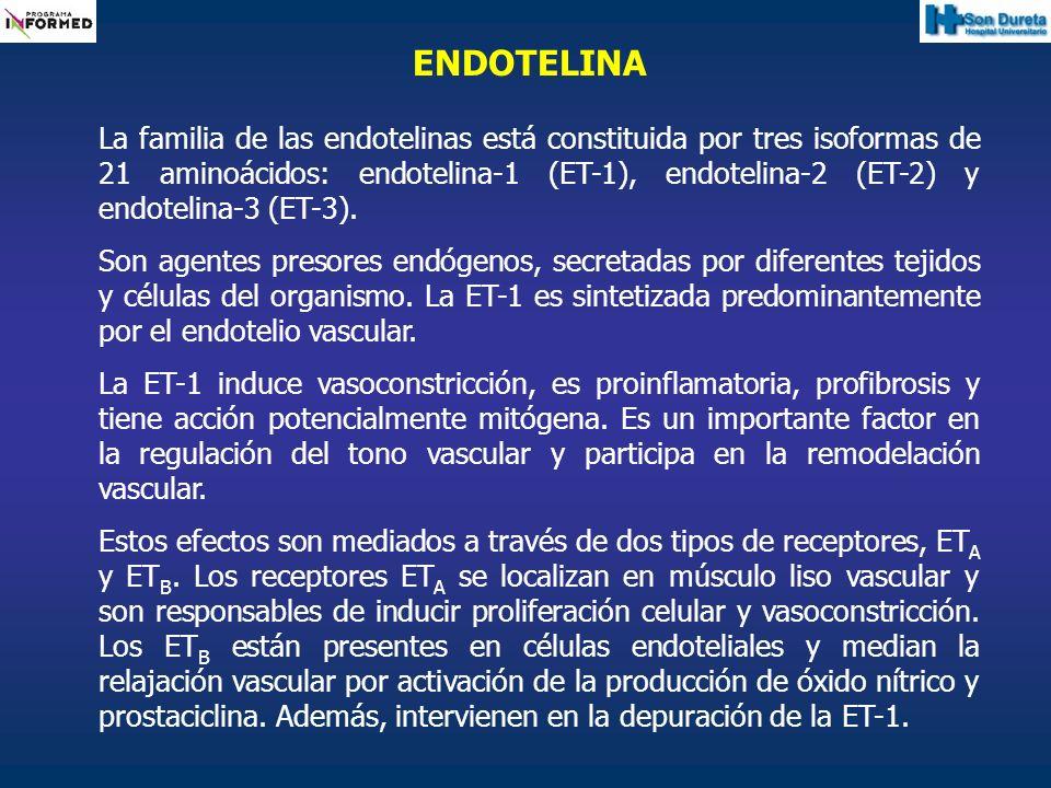 ENDOTELINA La familia de las endotelinas está constituida por tres isoformas de 21 aminoácidos: endotelina-1 (ET-1), endotelina-2 (ET-2) y endotelina-
