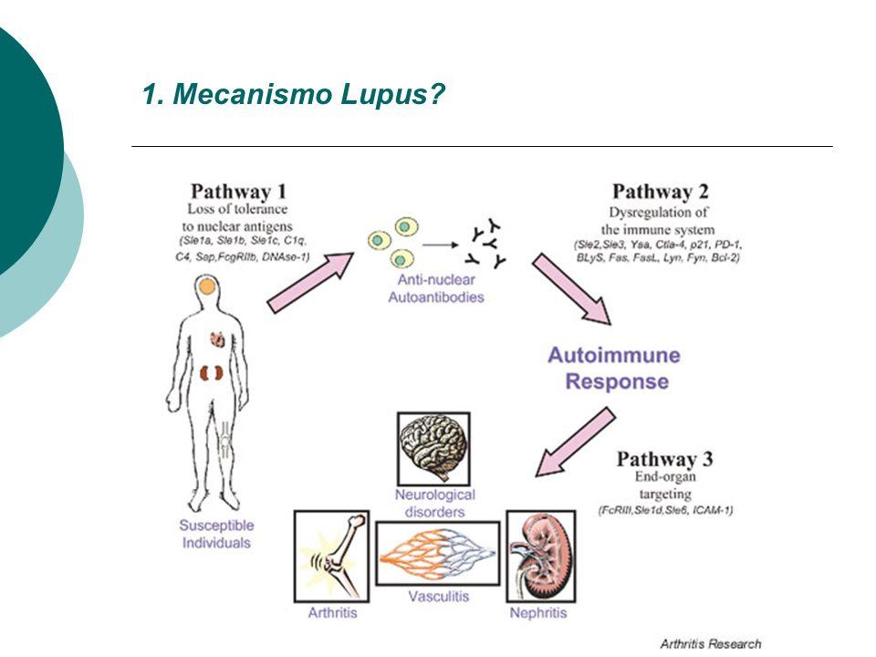 1. Mecanismo Lupus?