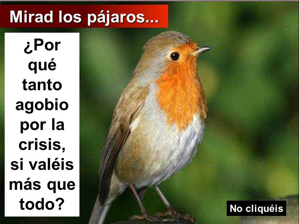 Mirad a los pájaros: ni siembran, ni siegan, ni almacenan y, sin embargo, vuestro Padre celestial los alimenta. ¿No valéis vosotros más que ellos?