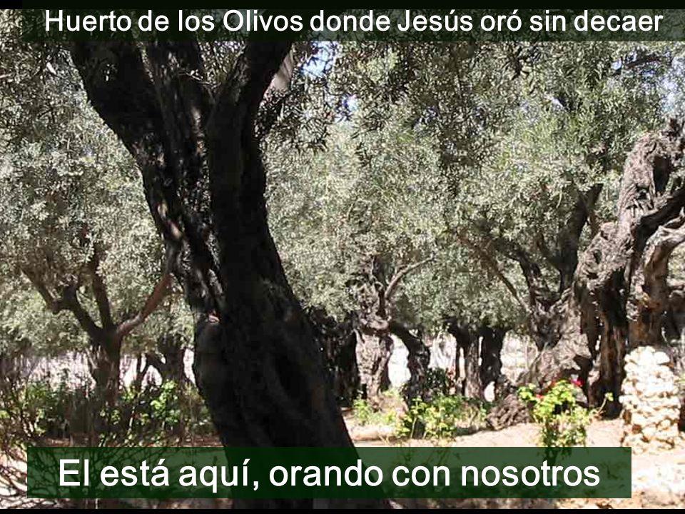 Huerto de los Olivos donde Jesús oró sin decaer El está aquí, orando con nosotros