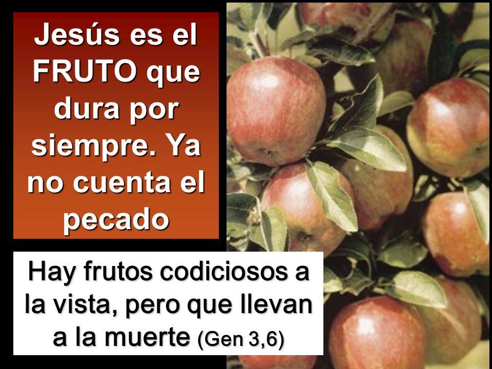 No sois vosotros los que me habéis elegido, soy yo quien os he elegido y os he destinado para que vayáis y deis fruto, y vuestro fruto dure. De modo q