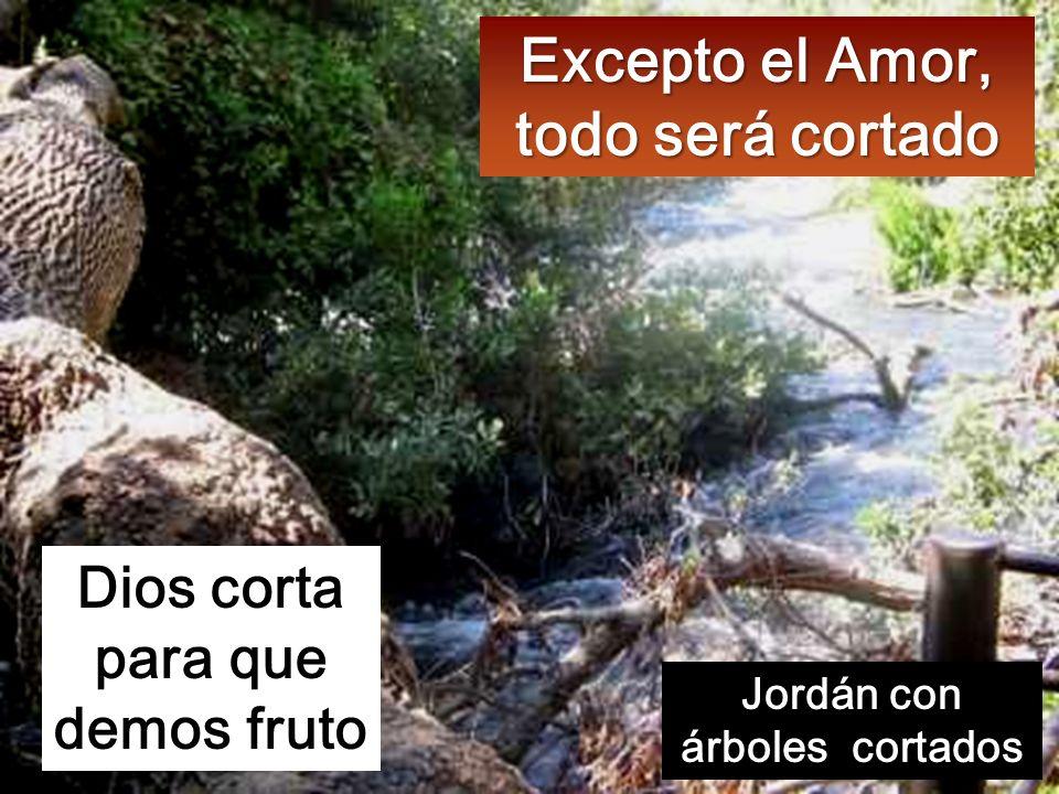 Ya toca el hacha la base de los árboles, y el árbol que no da buen fruto será talado y echado al fuego.