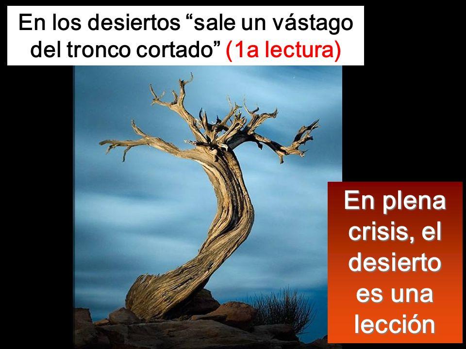 En plena crisis, el desierto es una lección En los desiertos sale un vástago del tronco cortado (1a lectura)