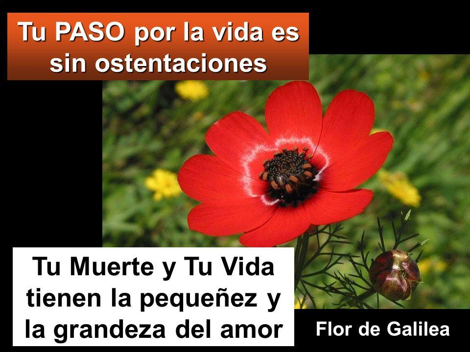 Tu Muerte y Tu Vida tienen la pequeñez y la grandeza del amor Tu PASO por la vida es sin ostentaciones Flor de Galilea