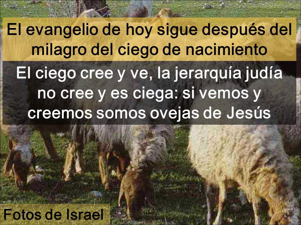 El evangelio de hoy sigue después del milagro del ciego de nacimiento El ciego cree y ve, la jerarquía judía no cree y es ciega: si vemos y creemos somos ovejas de Jesús Fotos de Israel