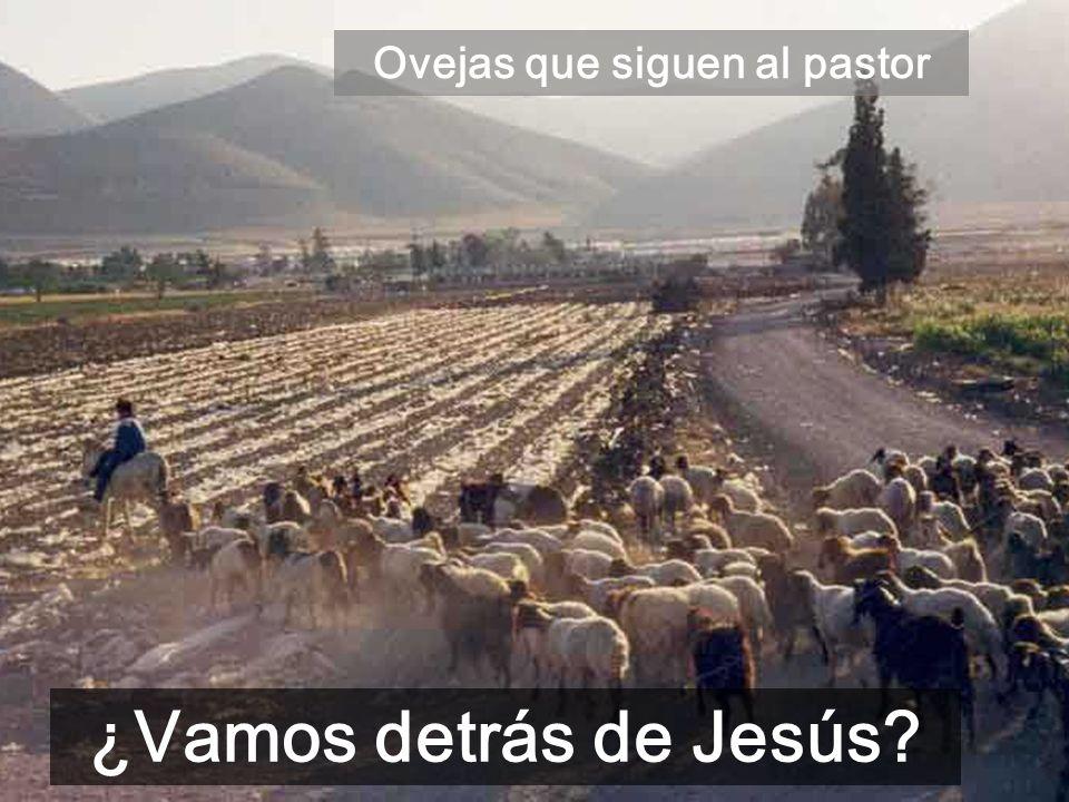 Ovejas que siguen al pastor ¿Vamos detrás de Jesús?