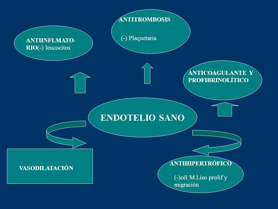 ENDOTELIO SANO ANTITROMBOSIS ANTICOAGULANTE Y PROFIBRINOLÍTICO ANTIINFLMATO- RIO(-) leucocitos ANTIHIPERTRÓFICO (-)cél M.Liso prolif y migración VASOD