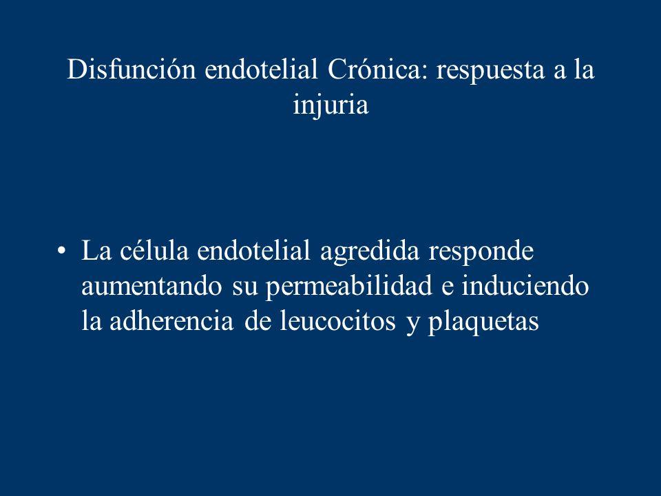 Disfunción endotelial Crónica: respuesta a la injuria La célula endotelial agredida responde aumentando su permeabilidad e induciendo la adherencia de