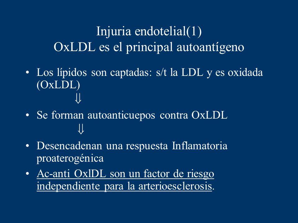 Injuria endotelial(1) OxLDL es el principal autoantígeno Los lípidos son captadas: s/t la LDL y es oxidada (OxLDL) Se forman autoanticuepos contra OxL