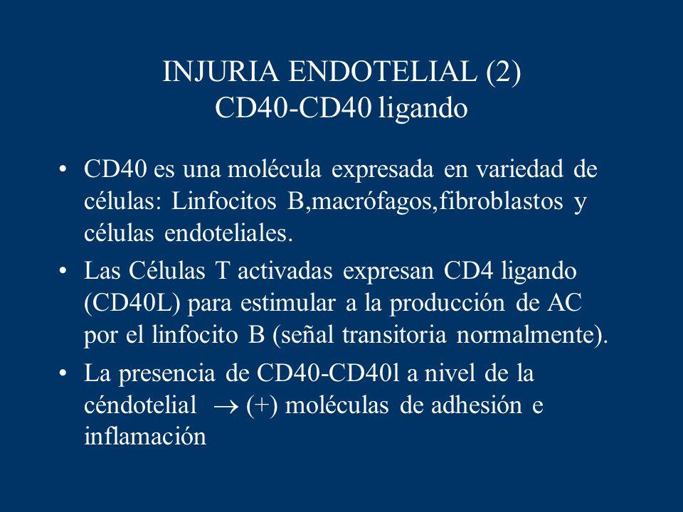 INJURIA ENDOTELIAL (2) CD40-CD40 ligando CD40 es una molécula expresada en variedad de células: Linfocitos B,macrófagos,fibroblastos y células endotel