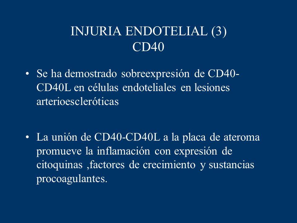 INJURIA ENDOTELIAL (3) CD40 Se ha demostrado sobreexpresión de CD40- CD40L en células endoteliales en lesiones arterioescleróticas La unión de CD40-CD