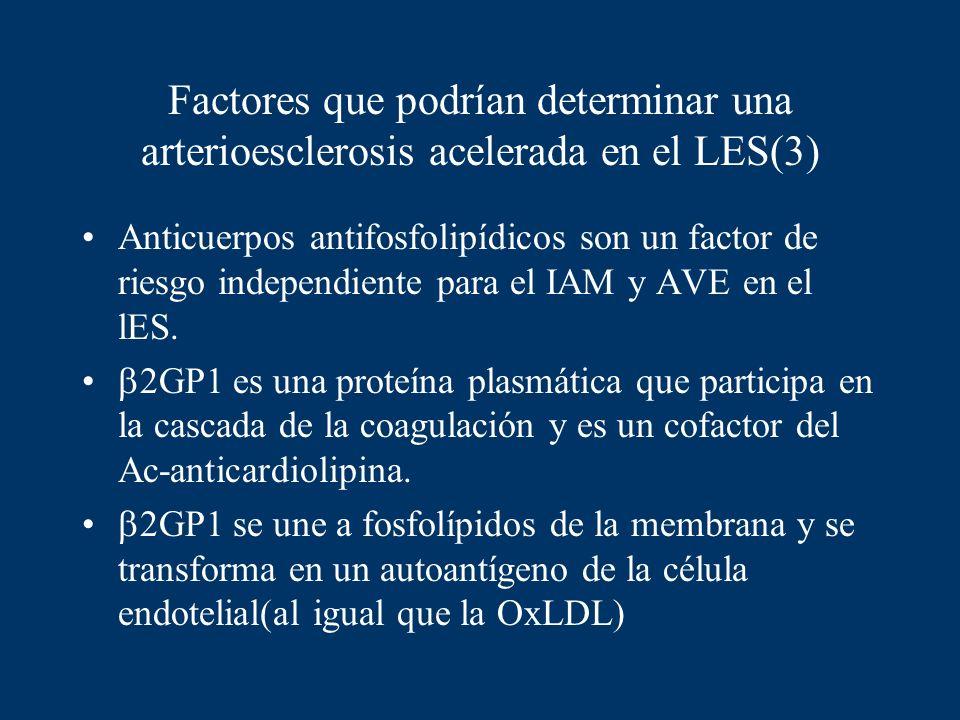 Factores que podrían determinar una arterioesclerosis acelerada en el LES(3) Anticuerpos antifosfolipídicos son un factor de riesgo independiente para