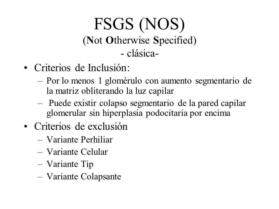 FSGS (NOS) (Not Otherwise Specified) - clásica- Criterios de Inclusión: –Por lo menos 1 glomérulo con aumento segmentario de la matriz obliterando la