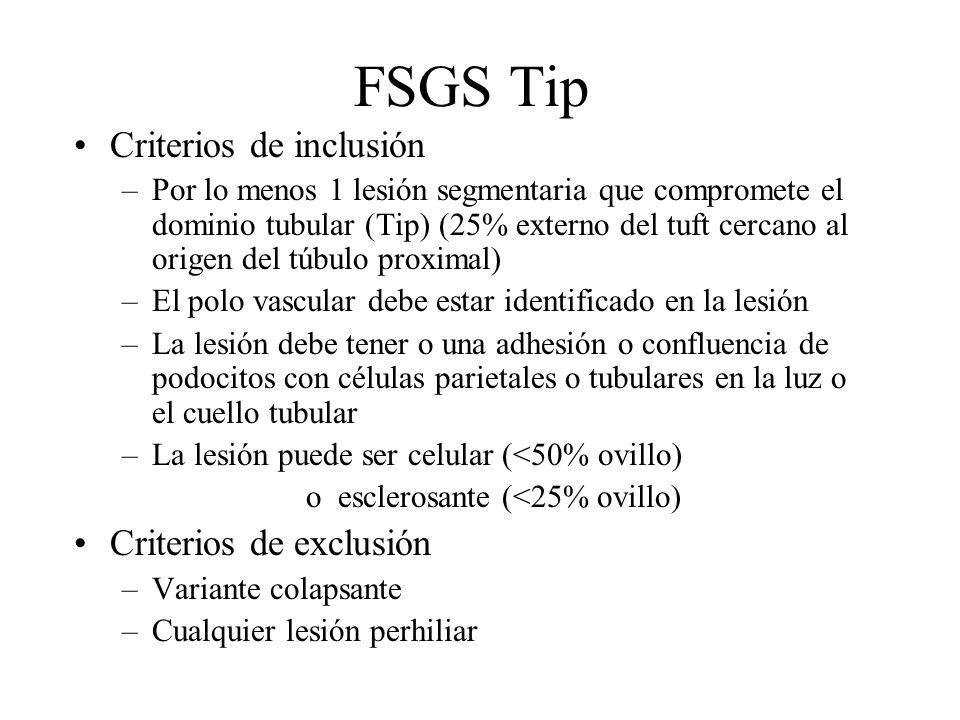 FSGS Tip Criterios de inclusión –Por lo menos 1 lesión segmentaria que compromete el dominio tubular (Tip) (25% externo del tuft cercano al origen del
