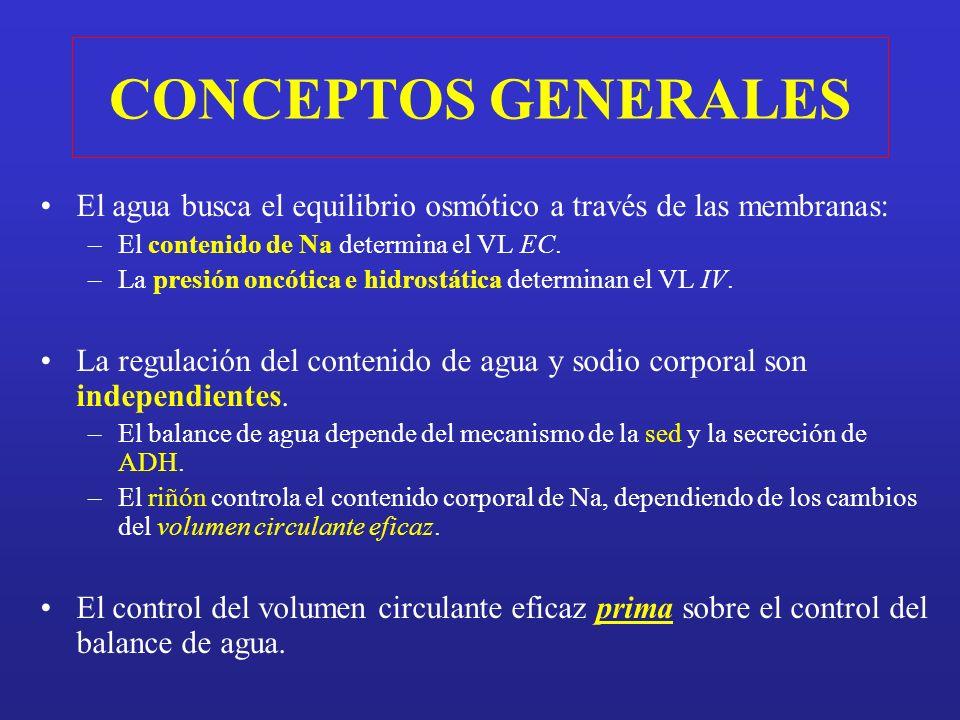 Suerte que tenemos ADH La regulación del EGRESO DE AGUA por la secreción de ADH y del INGRESO DE AGUA por la SED, INTERVIENEN CONJUNTAMENTE en la REGULACIÓN DEL VOLUMEN Y LA OSMOLALIDAD DE LOS LÍQUIDOS CORPORALES.