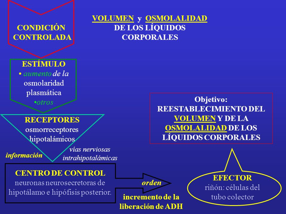 ESTÍMULO aumento de la osmolaridad plasmática otros vías nerviosas intrahipotalámicas RECEPTORES osmorreceptores hipotalámicos información CENTRO DE CONTROL neuronas neurosecretoras de hipotálamo e hipófisis posterior.