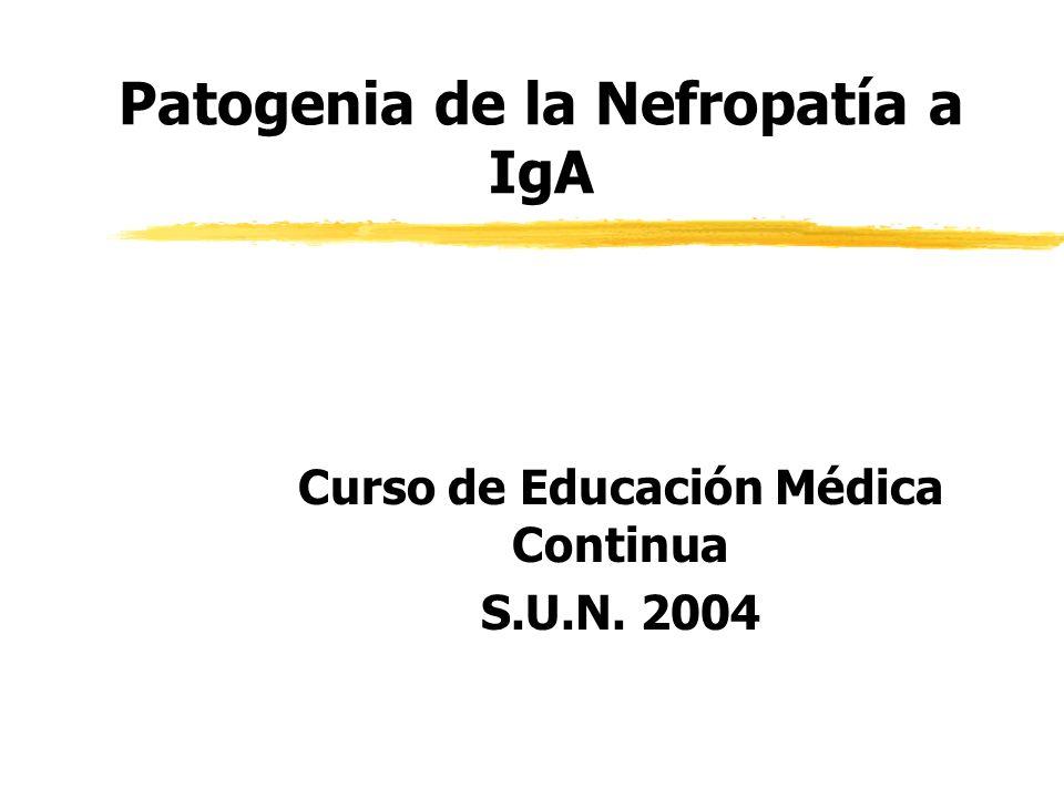Patogenia de la Nefropatía a IgA Curso de Educación Médica Continua S.U.N. 2004