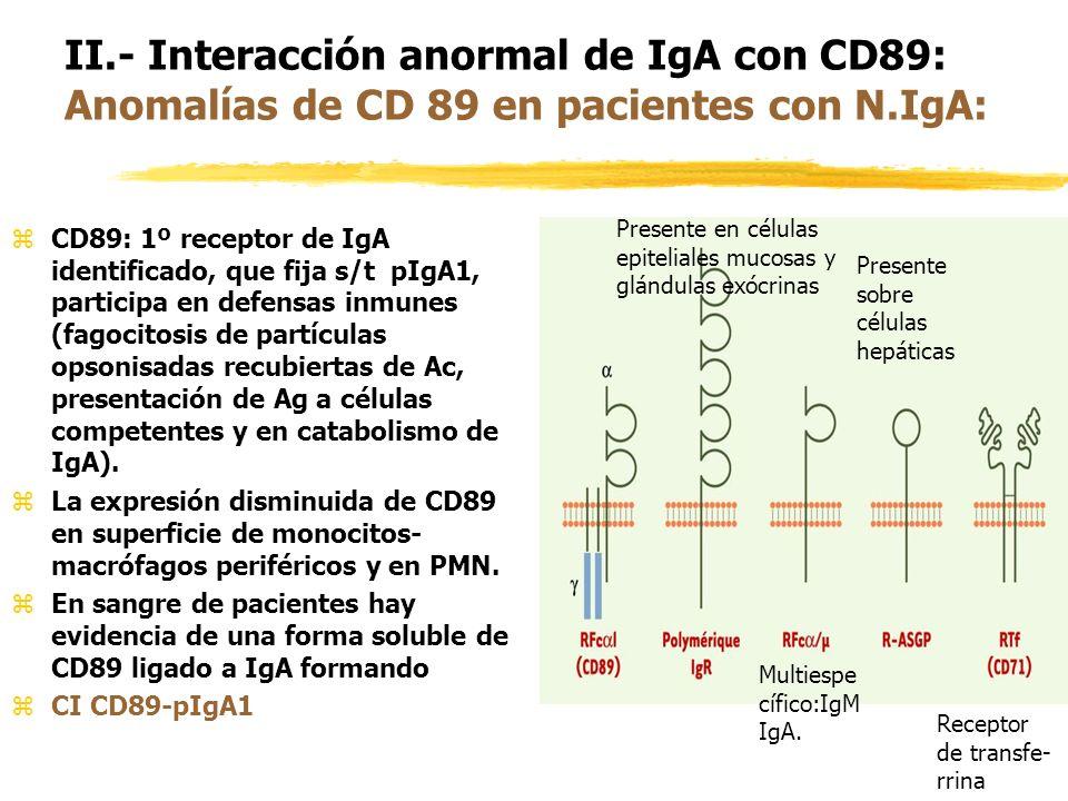 zCD89: 1º receptor de IgA identificado, que fija s/t pIgA1, participa en defensas inmunes (fagocitosis de partículas opsonisadas recubiertas de Ac, pr