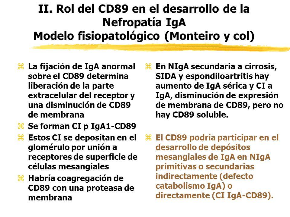 II. Rol del CD89 en el desarrollo de la Nefropatía IgA Modelo fisiopatológico (Monteiro y col) zLa fijación de IgA anormal sobre el CD89 determina lib