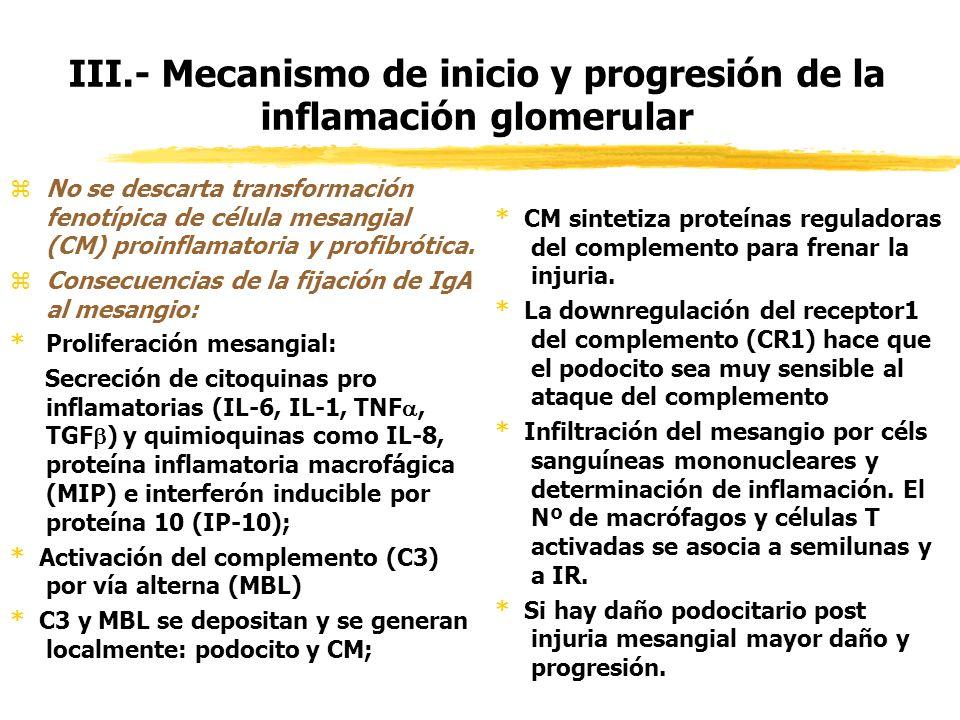 III.- Mecanismo de inicio y progresión de la inflamación glomerular zNo se descarta transformación fenotípica de célula mesangial (CM) proinflamatoria