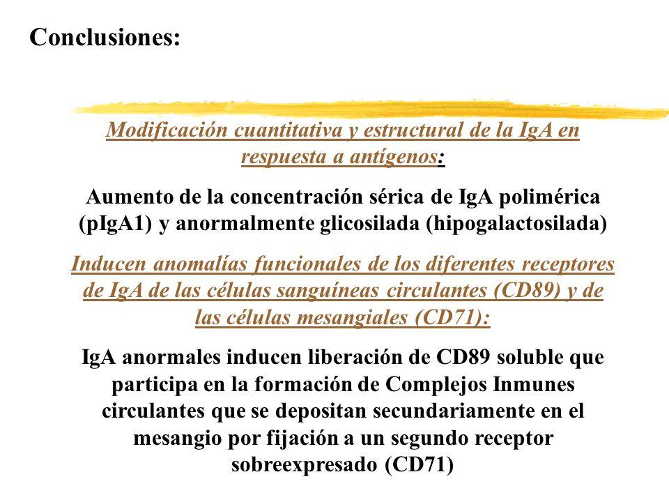 Conclusiones: Modificación cuantitativa y estructural de la IgA en respuesta a antígenos: Aumento de la concentración sérica de IgA polimérica (pIgA1)
