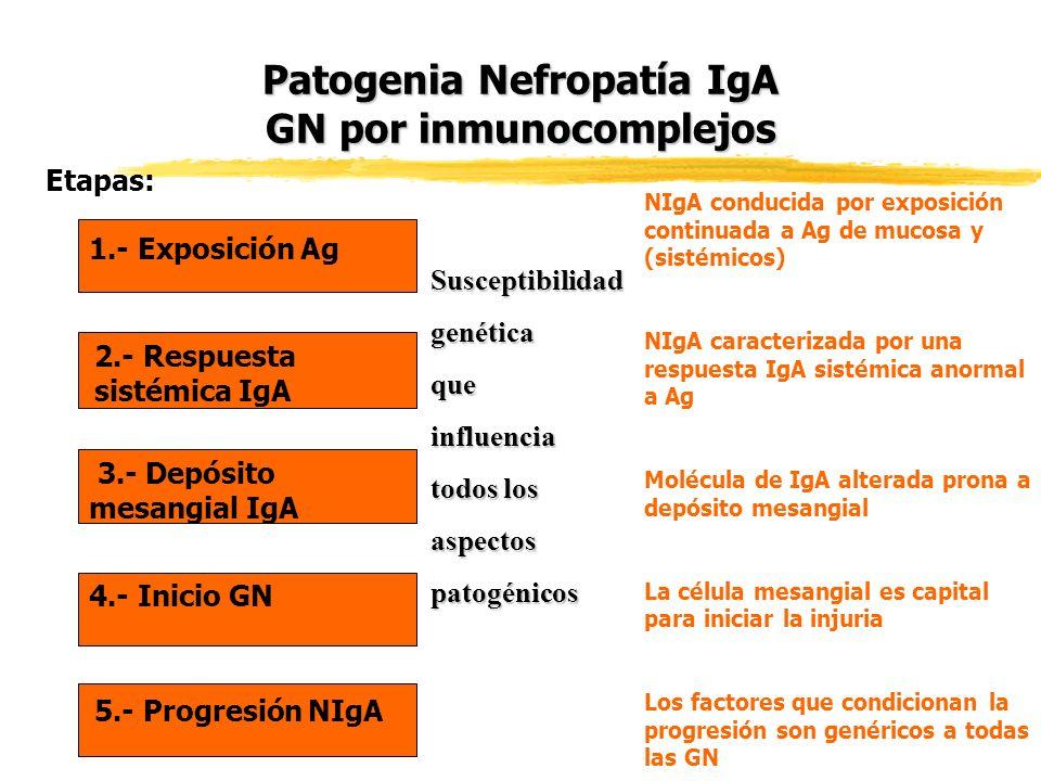 Patogenia Nefropatía IgA GN por inmunocomplejos 1.- Exposición Ag 2.- Respuesta sistémica IgA 3.- Depósito mesangial IgA 4.- Inicio GN 5.- Progresión