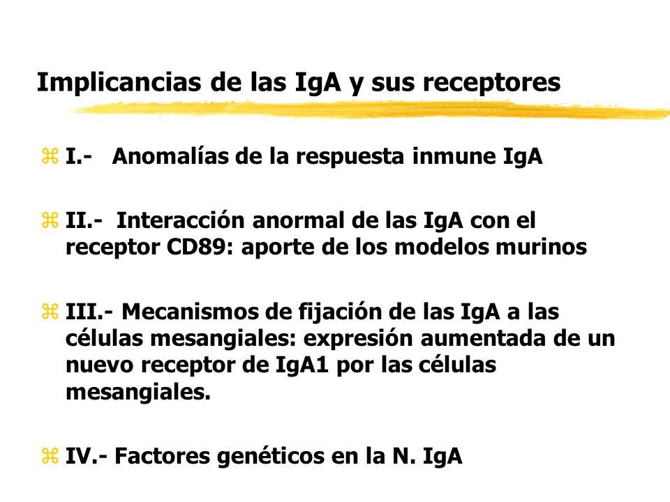 Implicancias de las IgA y sus receptores zI.- Anomalías de la respuesta inmune IgA zII.- Interacción anormal de las IgA con el receptor CD89: aporte d
