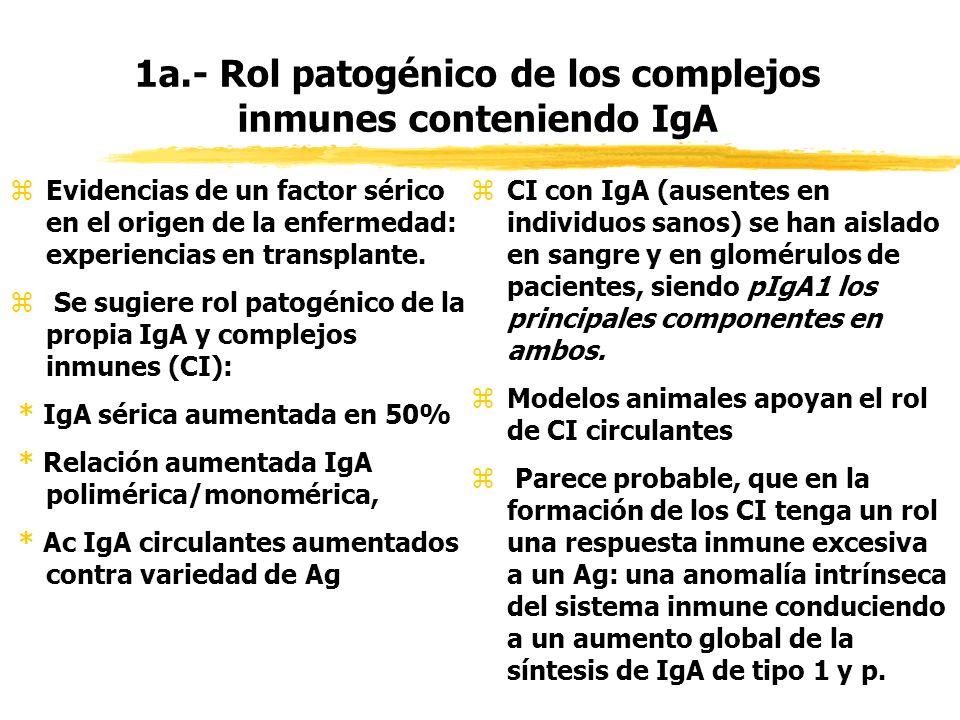 1a.- Rol patogénico de los complejos inmunes conteniendo IgA zEvidencias de un factor sérico en el origen de la enfermedad: experiencias en transplant
