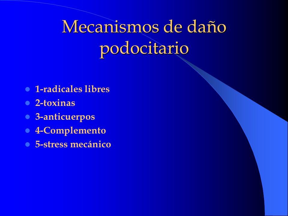 Mecanismos de daño podocitario 1-radicales libres 2-toxinas 3-anticuerpos 4-Complemento 5-stress mecánico