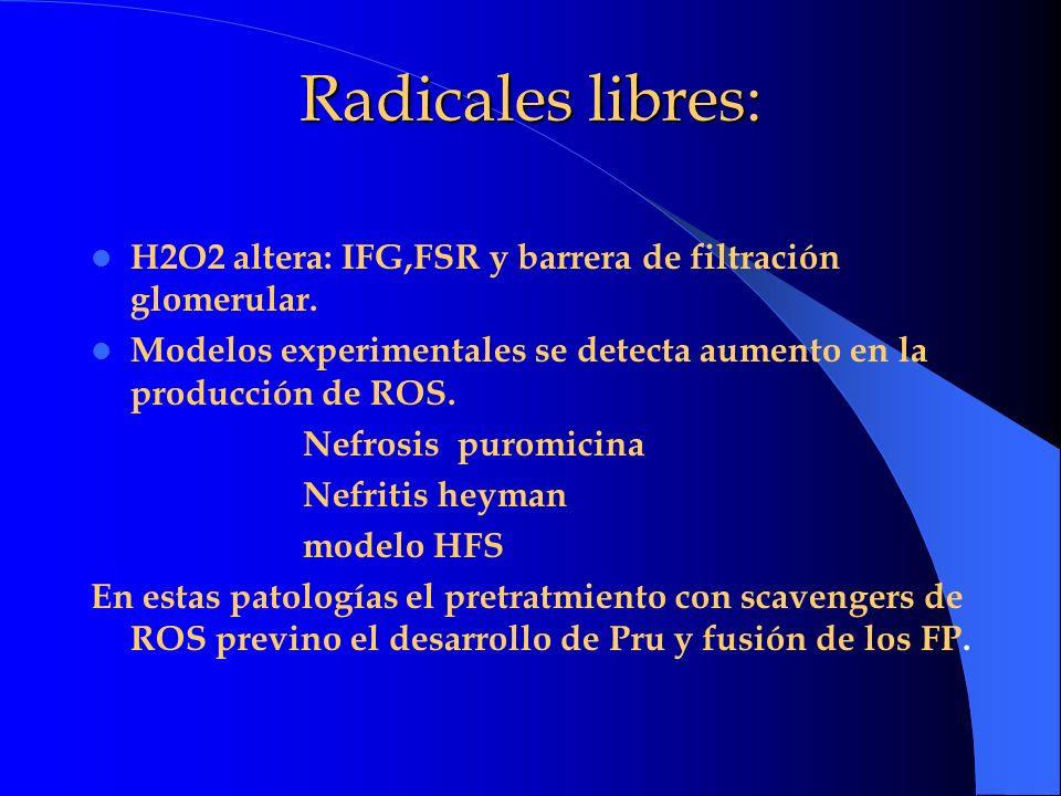 Radicales libres: H2O2 altera: IFG,FSR y barrera de filtración glomerular. Modelos experimentales se detecta aumento en la producción de ROS. Nefrosis