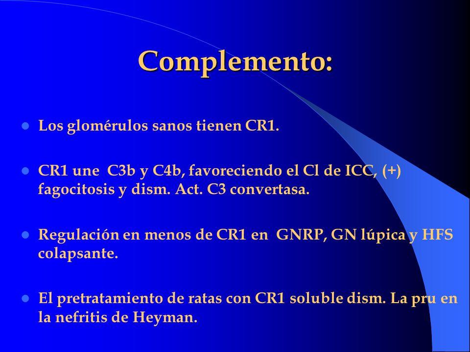 Complemento: Los glomérulos sanos tienen CR1. CR1 une C3b y C4b, favoreciendo el Cl de ICC, (+) fagocitosis y dism. Act. C3 convertasa. Regulación en