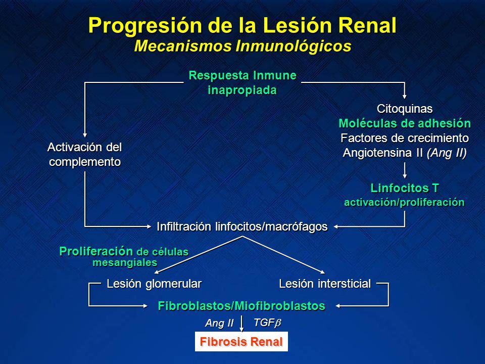 Progresión de la Lesión Renal Mecanismos no Inmunológicos Stress mecánico Angiotensina II (Ang II) Citoquinas Moléculas de adhesión Factores de crecimiento Otras Infiltración linfocitos/macrófagos Linfocitos T activación/proliferación Lesión intersticial Lesión glomerular Fibroblastos/Miofibroblastos Fibrosis Renal Injuria podocitaria primaria Lesión de la barrera glomerular Alteraciones genéticas/bioquímicas Proliferación de células mesangiales mesangiales Ang II TGF TGF