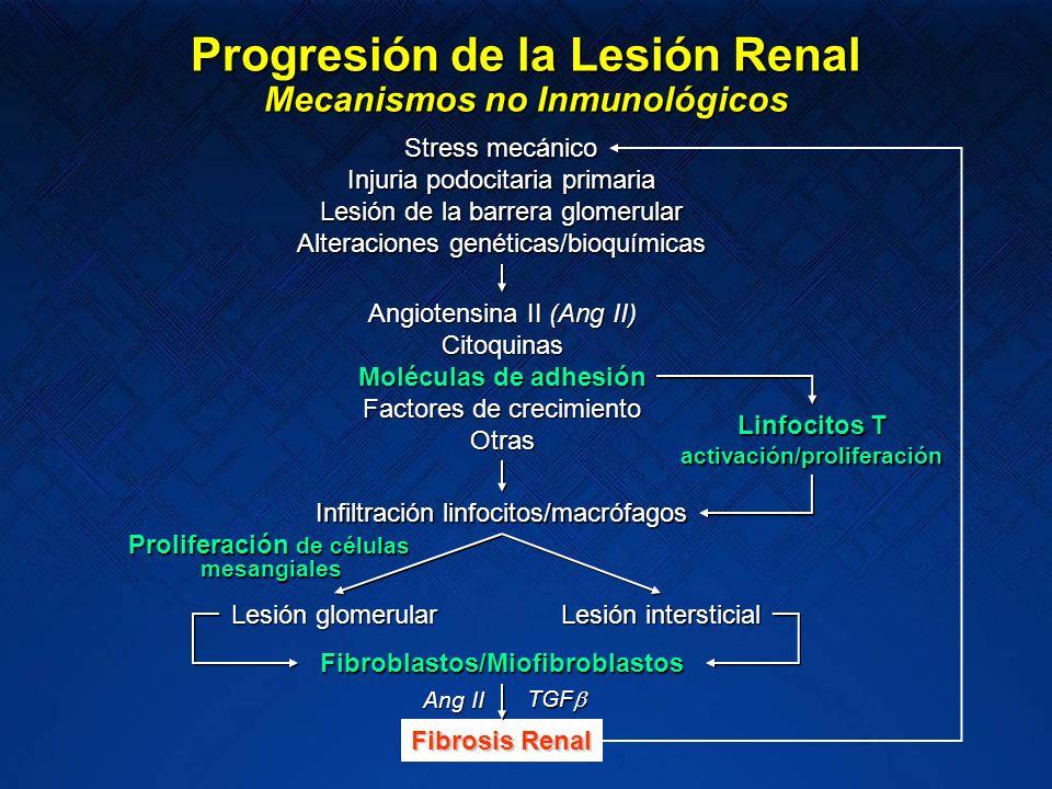Progresión de la Lesión Renal Mecanismos no Inmunológicos Stress mecánico Angiotensina II (Ang II) Citoquinas Moléculas de adhesión Factores de crecim
