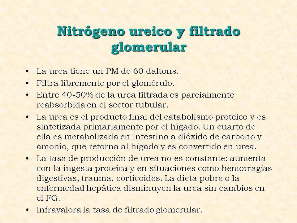 Nitrógeno ureico y filtrado glomerular La urea tiene un PM de 60 daltons.La urea tiene un PM de 60 daltons. Filtra libremente por el glomérulo.Filtra